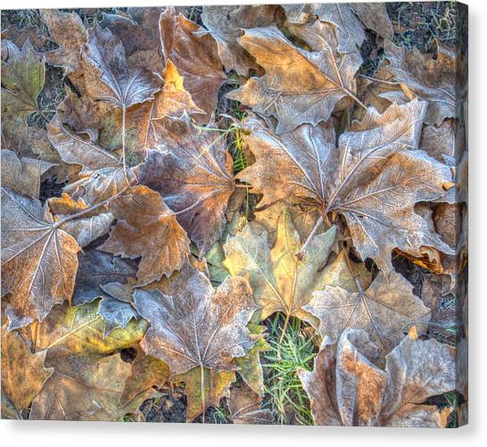 Frosted Leaves 8x10 Canvas Print