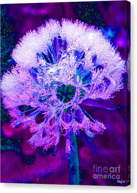 Frosted Canvas Print by Nick Gustafson