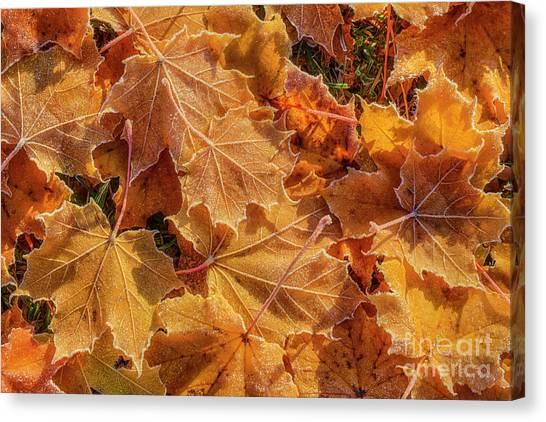 Maple Leaf Art Canvas Print - Frosted by Veikko Suikkanen