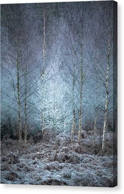 Sherwood Forest Canvas Print - Frostiest Tree In The Forest by Chris Dale