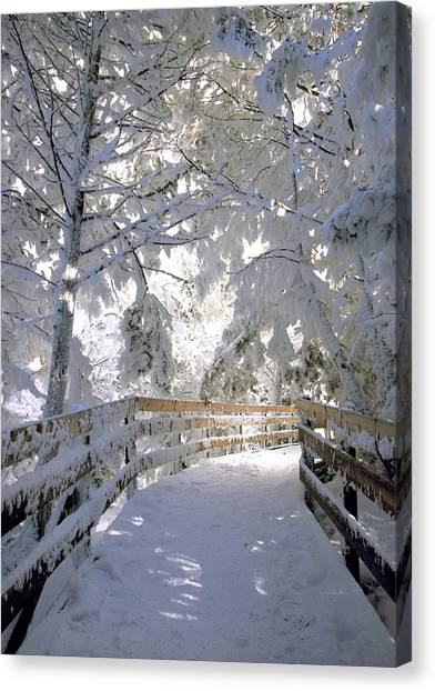 Frosty Boardwalk Canvas Print
