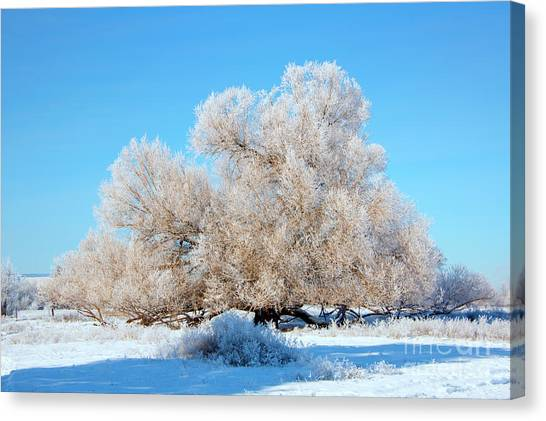 Hoar Frost Canvas Print - Frosty  by Mike Dawson