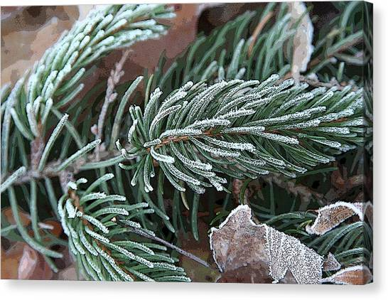 Frosty Pine Branch Canvas Print