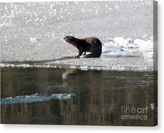 Otters Canvas Print - Frosty River Otter  by Mike Dawson