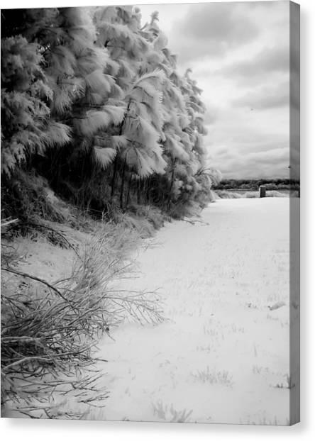 Frosty Treeline Canvas Print