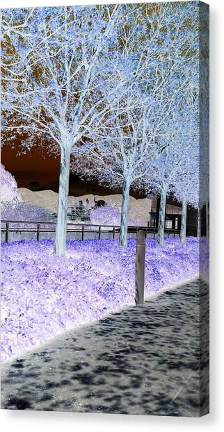 Frosty Trees At The Getty Canvas Print