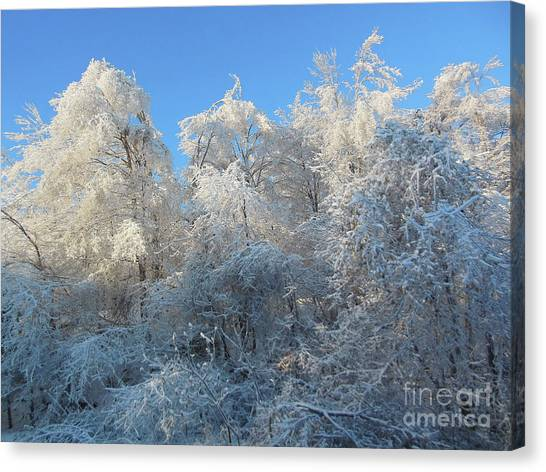 Frosty Trees Canvas Print