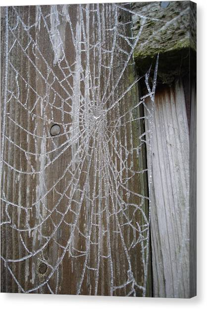 Frosty Web Canvas Print