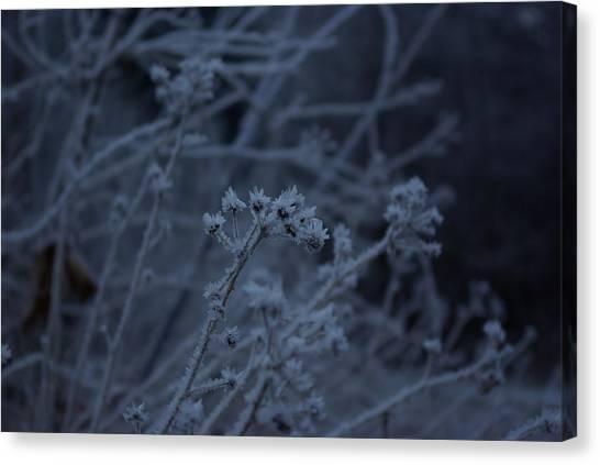 Frozen Buds Canvas Print