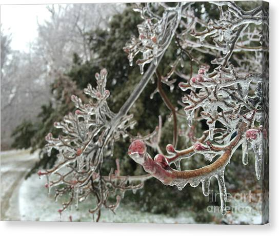 Haverford Canvas Print - Frozen Buds by Clay Cofer