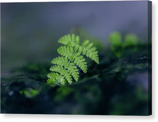 Frozen Fern II Canvas Print