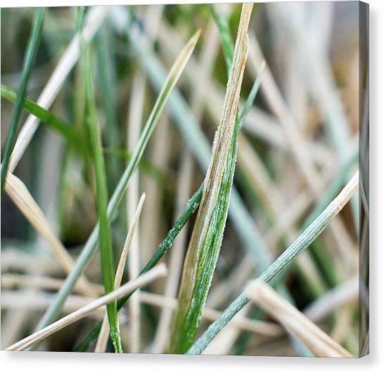Frozen Grass Canvas Print