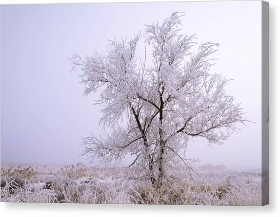 Salt Canvas Print - Frozen Ground by Chad Dutson
