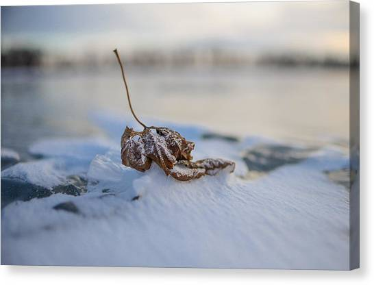 Frozen Leaf On Lake Reno Canvas Print