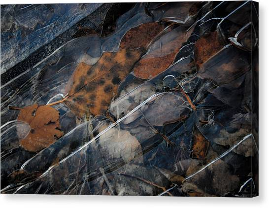Frozen Leaves In Fall Canvas Print by Jonathan Hansen