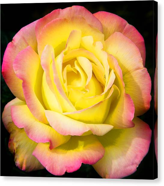 Neon Rose Canvas Prints (Page #14 of 15) | Fine Art America