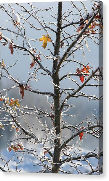 Frozen Remnants Canvas Print by Holly Ethan