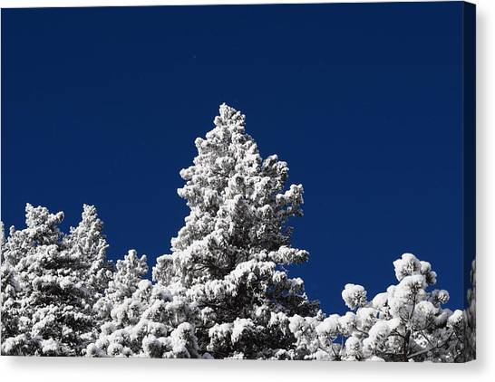 Frozen Tranquility Ute Pass Cos Co Canvas Print