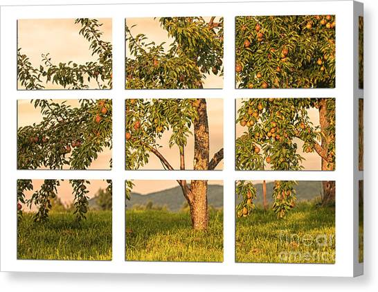 Fruit In The Orchard Through The Window Pane Canvas Print