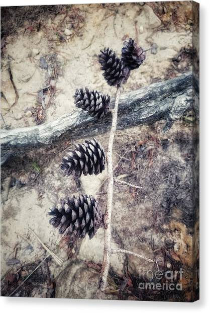 Fruit Of The Pine Canvas Print
