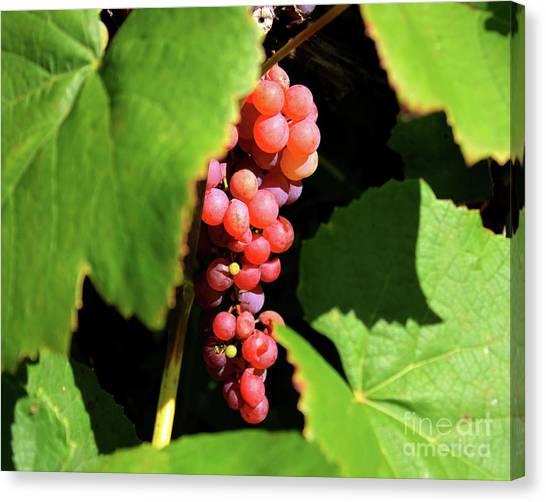Fruit Of The Vine Canvas Print
