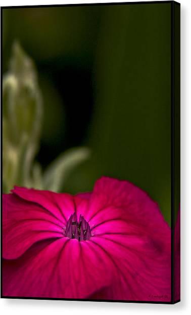 Fuchsia Delight Canvas Print by Daniel G Walczyk