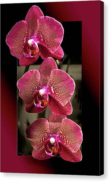 Fuchsia Orchids Oof Canvas Print
