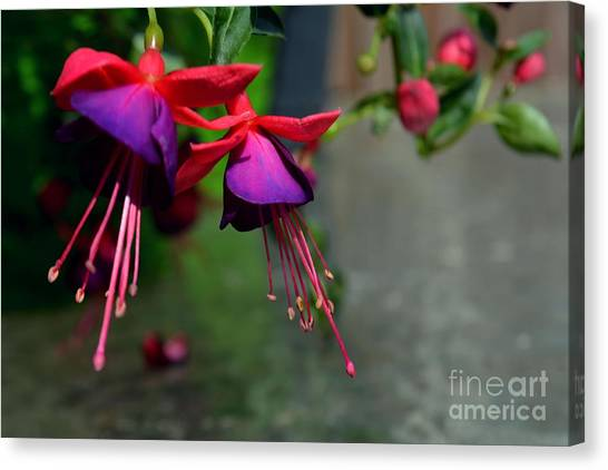 Fuchsia Original Photo Canvas Print