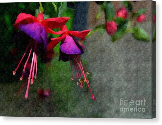 Fuchsia's Beating As One Together -silk Edit Canvas Print