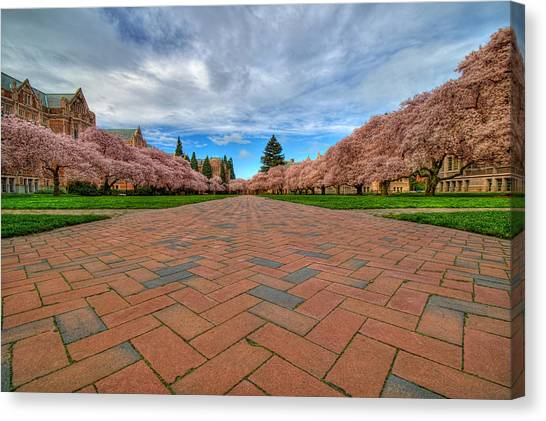 University Of Washington Canvas Print - Full Bloom by Dan Mihai