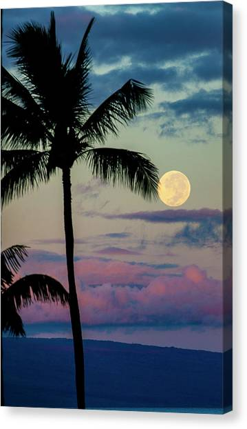 Full Moon And Palm Trees Canvas Print