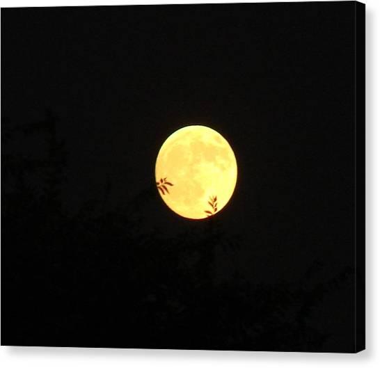 Full Moon August 2008 Canvas Print