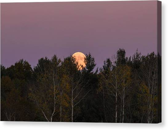 Full Moon Over Orchard Canvas Print