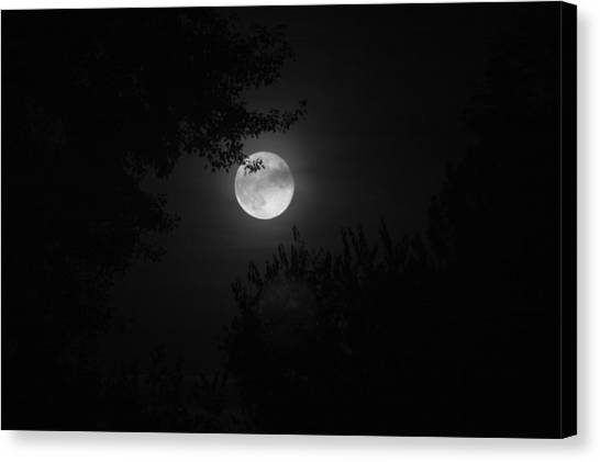 Full Moon With Branches Canvas Print