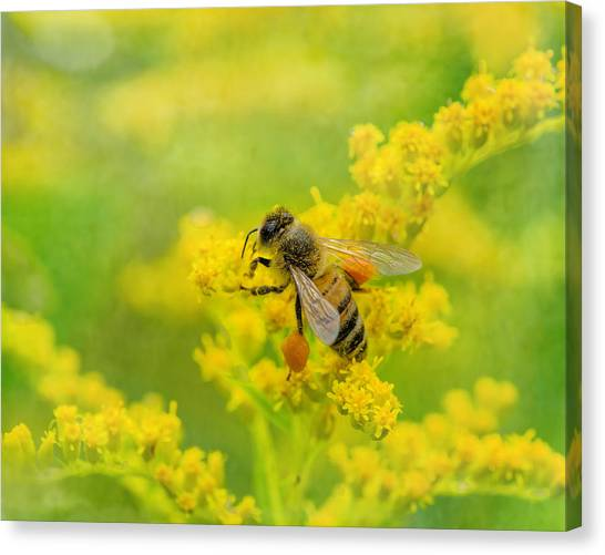 Pollinator Canvas Print - Fully Loaded by Susan Capuano