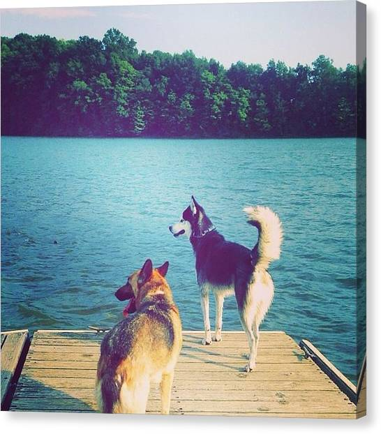German Shepherds Canvas Print - Fun In The Sun by Tori Omatick