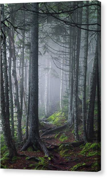 Fundy Fog Canvas Print