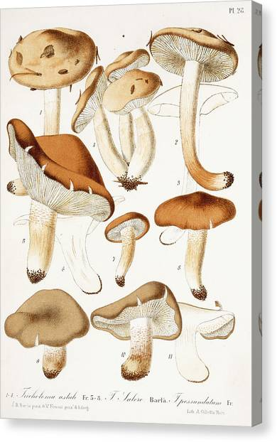 Shrooms Canvas Print - Fungi by Jean-Baptiste Barla