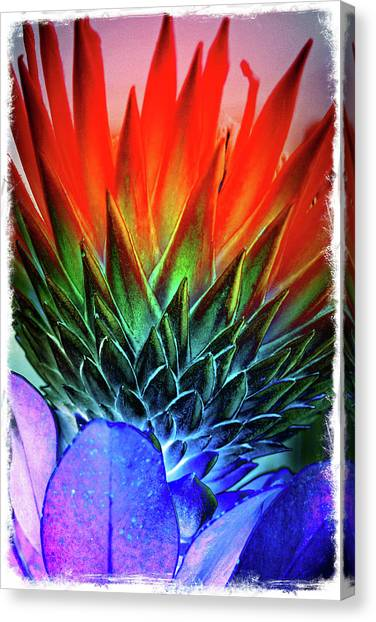 Funky Protea Canvas Print