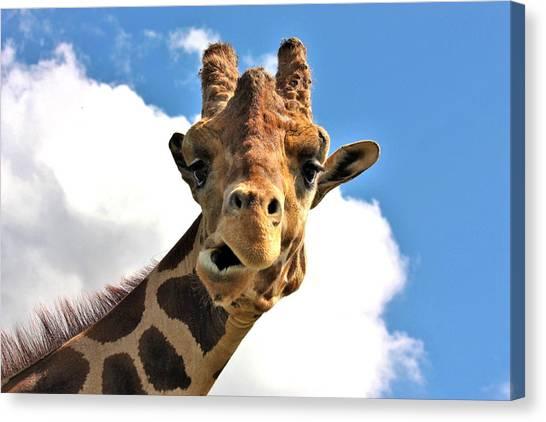 Funny Face Giraffe Canvas Print