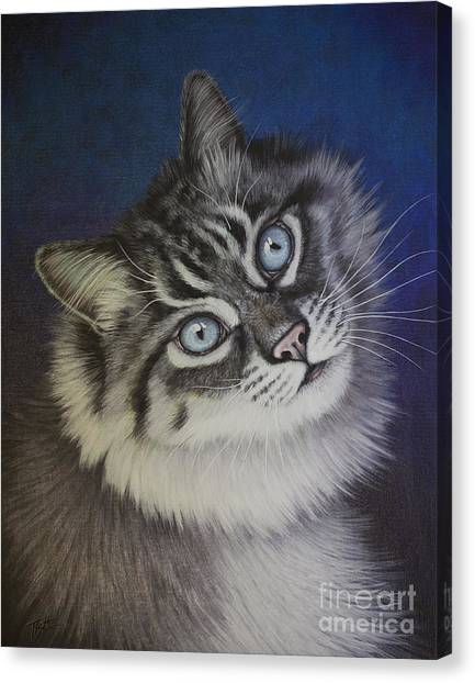 Furry Tabby Cat Canvas Print