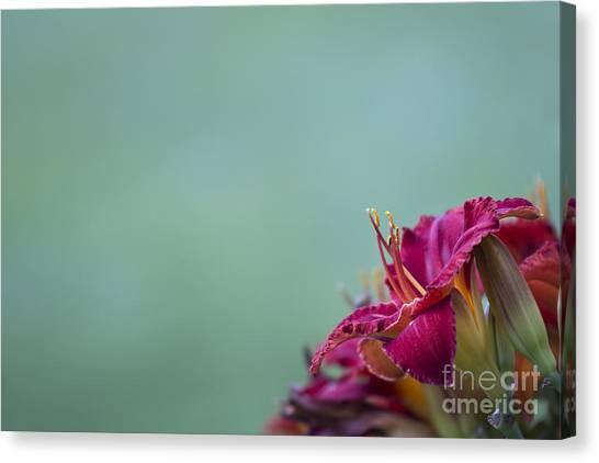 Fuchsia In Bloom Canvas Print