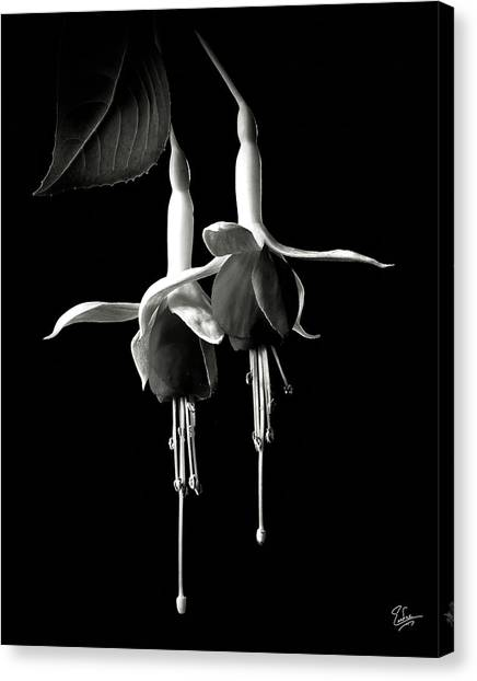 Fuschias In Black And White Canvas Print
