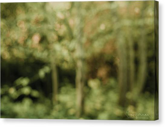 Canvas Print featuring the photograph Fuzzy Vision by Gene Garnace