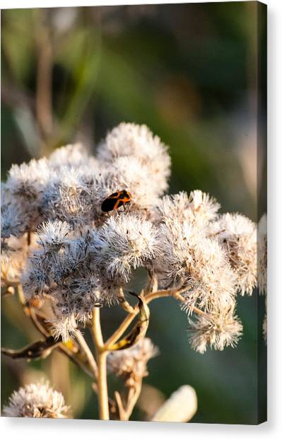 Fuzzy With Bug Canvas Print