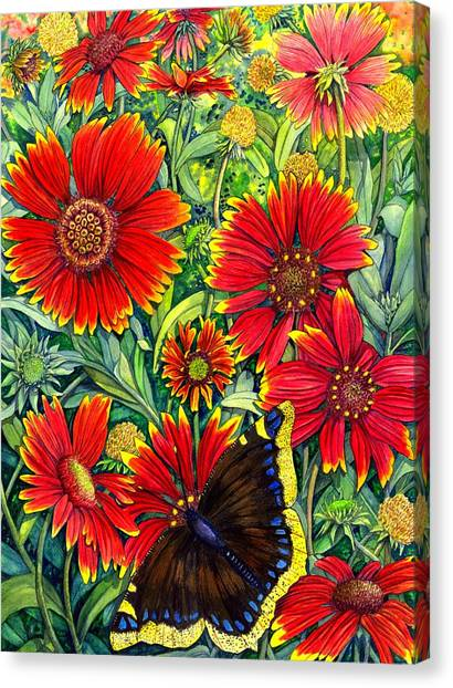 Gaillardia Canvas Print by Catherine G McElroy