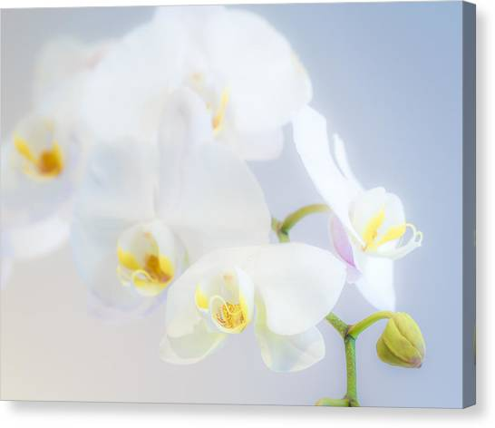 Gail's Orchids Canvas Print