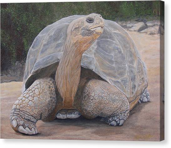 Galapagos Tortoise Canvas Print by Jeffrey Oldham