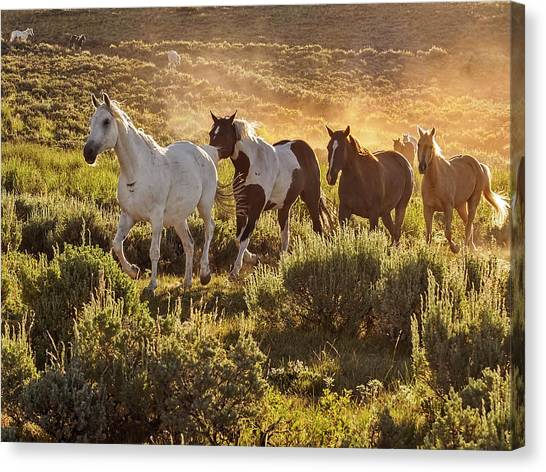 Galloping Down The Mountain Canvas Print