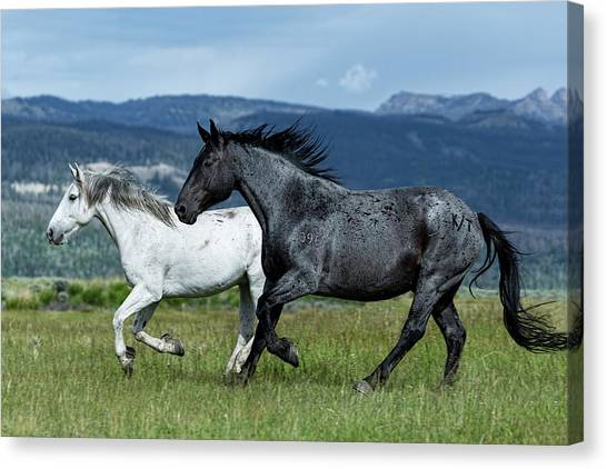 Galloping Through The Scenery In Wyoming Canvas Print